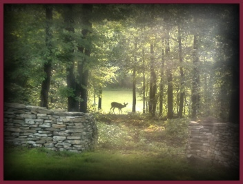 Deer in Path ~ view from our living room window